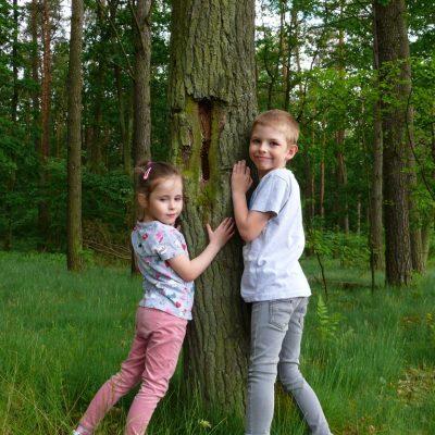 O czym szumią drzewa
